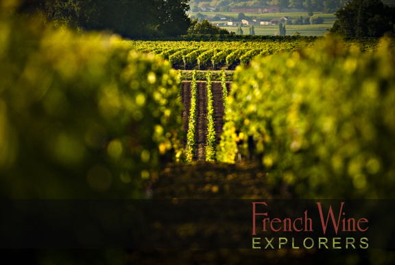 Wine Tours Bordeaux