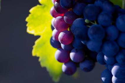 Burgundy Wine Tour-French Wine Explorers