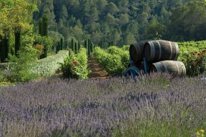Provence tours with French Wine Explorers