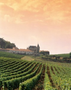 French wine tour