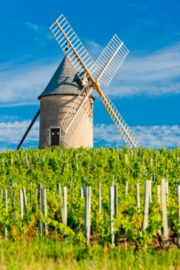 vineyards with windmill near Chénas, Beaujolais, Burgundy, France