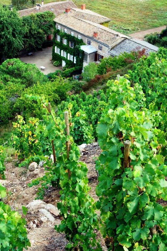 Condrieu vineyards