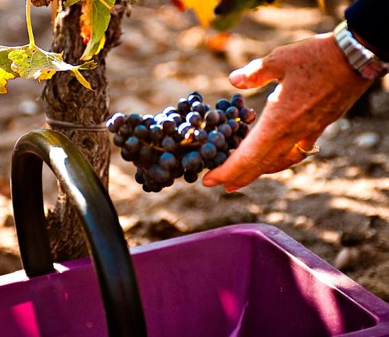 Bordeaux Harvest Tour