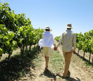 france wine touring
