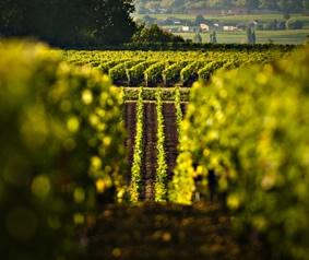 Custom Burgundy Wine Tours