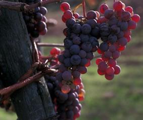 Custom Italy Wine Tours