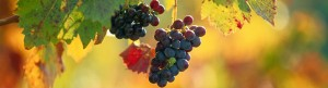 French-Wine-Tours-Banner-5